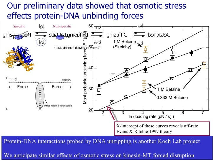 Our preliminary data showed that osmotic stress effects protein-DNA unbinding forces X-intercept of these curves reveals o...