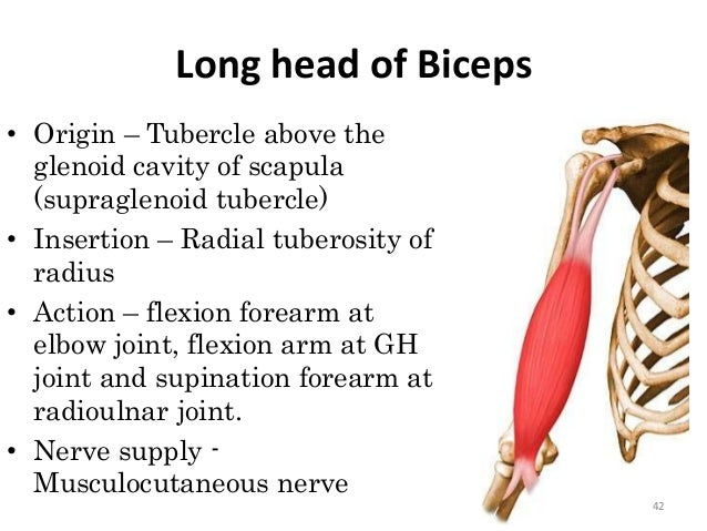 how to hit outer head of bicep