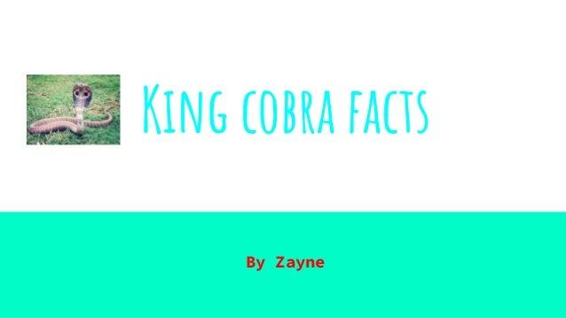 King cobra facts By Zayne