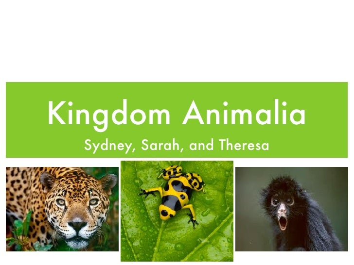 Kingdom Animalia  Sydney, Sarah, and Theresa