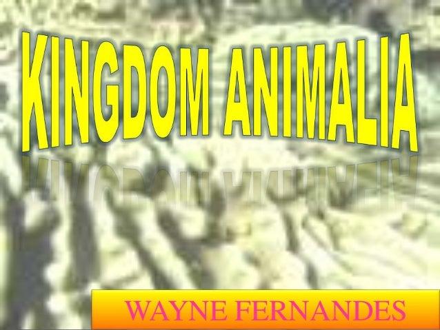 WAYNE FERNANDES