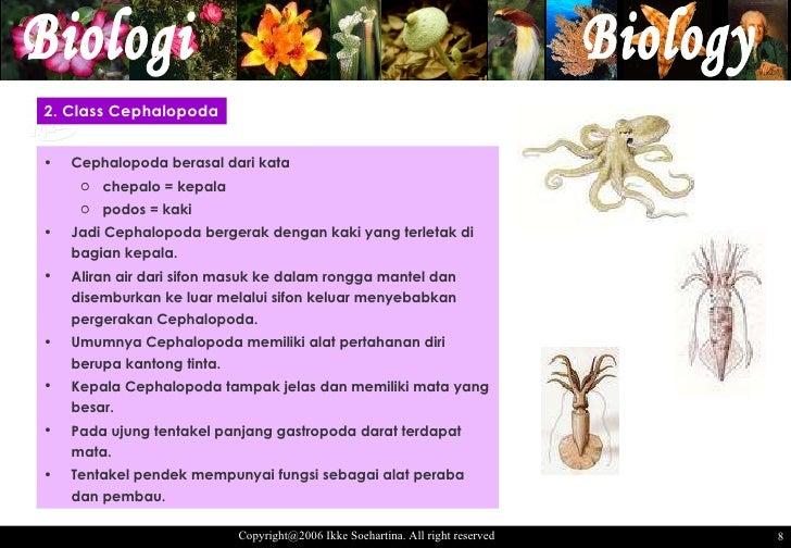 Gastropoda Bergerak Dengan