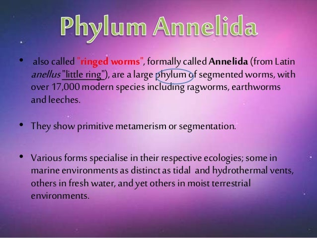 phylum poifera essay Name tutor institution subject code date of submission diversity of phylum chordata phylum overview all diversity of phylum chordata - essay phylum porifera.