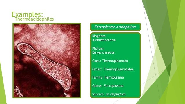 Essay on Archaebacteria