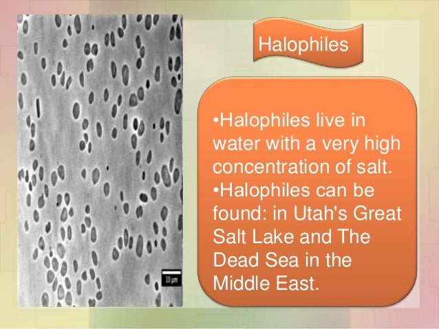 thermophile halophiles methanogens Extreme thermophiles are microorganisms adapted to temperatures normally found only in hot springs, hydrothermal vents and similar sites of geothermal activity.