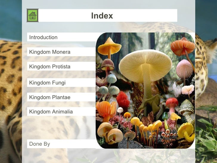 Index Introduction Kingdom Monera Kingdom Protista Kingdom Fungi Kingdom Plantae Kingdom Animalia Done By