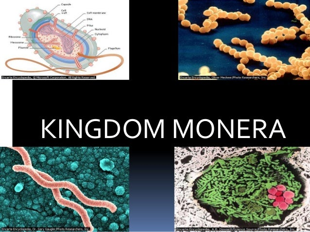 kingdom monera images