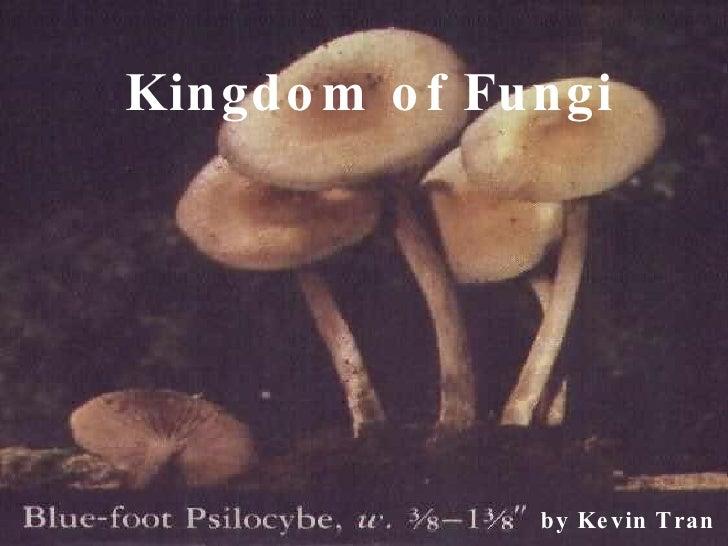 Kingdom of Fungi by Kevin Tran
