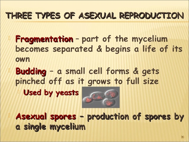 Three different forms of asexual reproduction