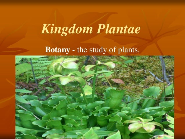 Kingdom Plantae Botany - the study of plants.