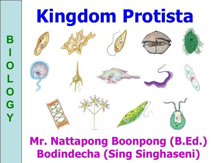 kingdom protista mr nattapong boonpong bed bodindecha sing singhaseni
