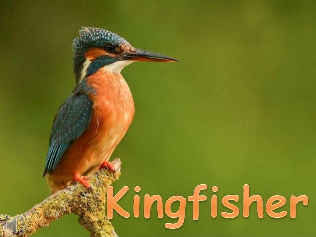 analysis of kingfisher Read this essay on kingfisher come browse our large digital warehouse of free sample essays get the knowledge you need in order to pass your classes and more only at termpaperwarehousecom.