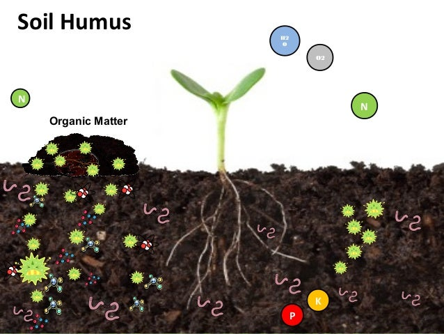 King humus plus presentation by kim c gabuya for Is soil living