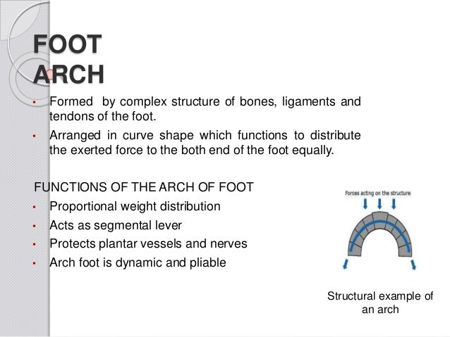 Kinisiology arch of foot