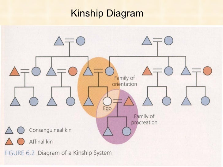 My Kinship Diagram  Wiring Library