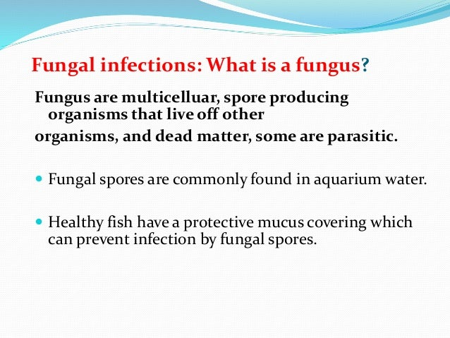ectoparasites disease in fish