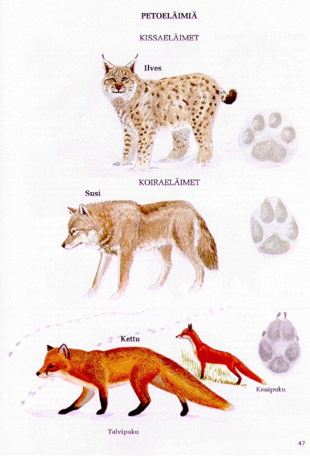 Kissaeläimet, koiraeläimet, karhut
