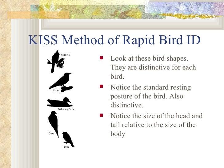 KISS Method of Rapid Bird ID <ul><li>Look at these bird shapes. They are distinctive for each bird.  </li></ul><ul><li>Not...