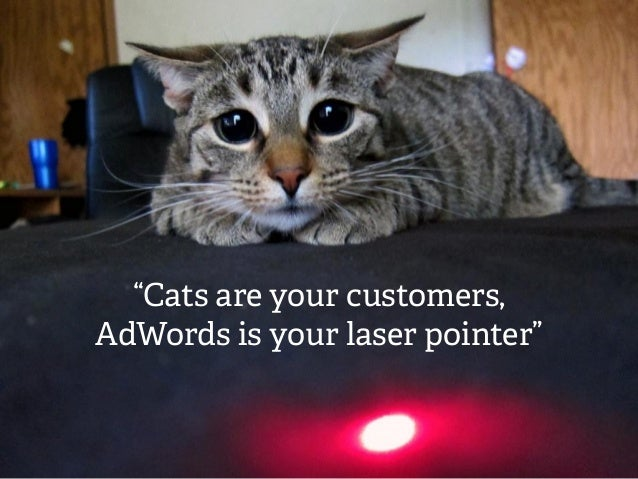 """""""Cats are your customers, AdWords is your laser pointer"""""""