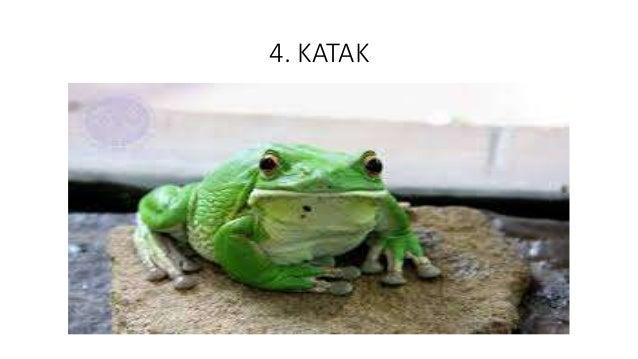4. KATAK