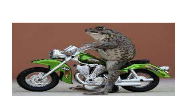 Kitaran hidup katak