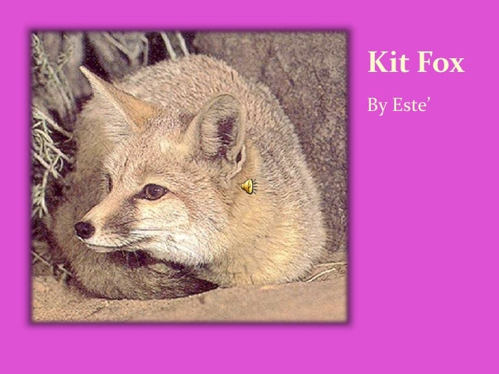 Kit Fox By Este'