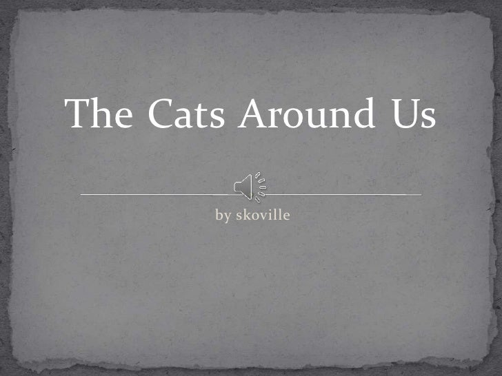 The Cats Around Us       by skoville