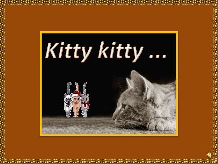 Kitty kitty...<br />