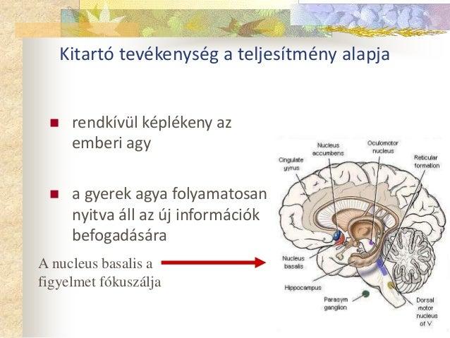 Kitartó tevékenység a teljesítmény alapja   rendkívül képlékeny az  emberi agy   a gyerek agya folyamatosan  nyitva áll ...