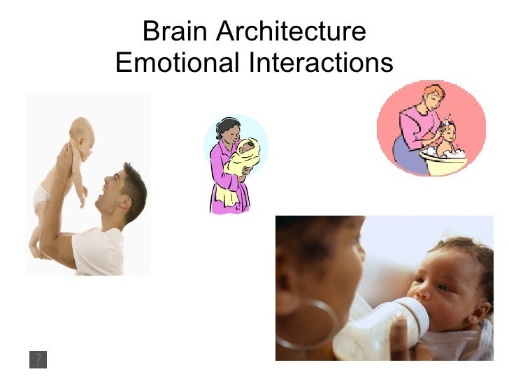 Brain Architecture Emotional Interactions