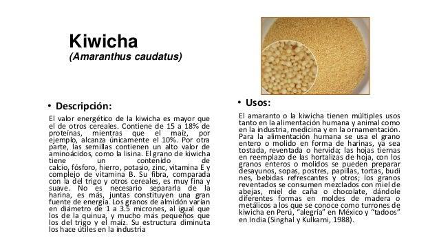 Kiwicha      (Amaranthus caudatus)• Descripción:                                         • Usos:El valor energético de la ...