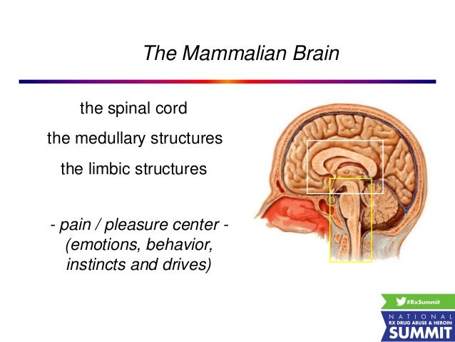"pleasure centers in the mammalian brain It became the paleo‑mammalian brain integrated into the developing cerebral brain of  studies in animals to be ""pleasure centers"" the ventral tegmental."