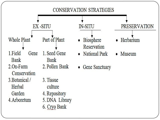 biodiversity conservation in situ and ex situ Biodiversity encompasses variety and variability of all forms of life on earth that play a great role in human existence its conservation embraces maintenance, sustainable utilization, and restoration, of the lost and degraded biodiversity through two basic and complementary strategies called in situ and ex situ.