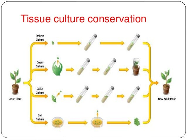 ex situ conservation Ex situ conservation methods ened in situ and is the for the conservation of the specific genetic resource, frequently, the will be to establish populations that maintain as.