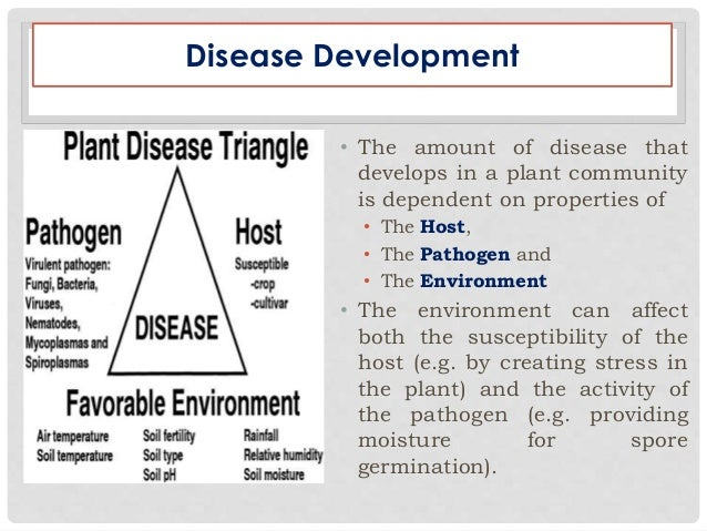 "evolution of plague bacteria If plague bacteria can survive the idea of amoebae acting as ""training grounds"" for the evolution of dangerous pathogens like plague conforms with what."