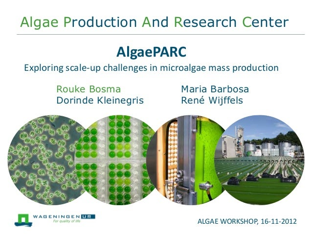 Algae Production And Research Center                     AlgaePARCExploring scale-up challenges in microalgae mass product...