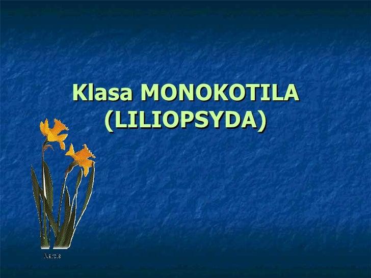 Klasa MONOKOTILA (LILIOPSYDA)