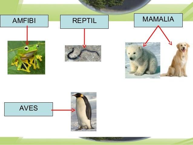 AMFIBI REPTIL MAMALIA AVES