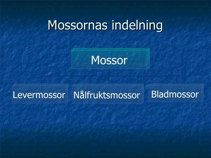 Mossornas indelning Mossor Levermossor Nålfruktsmossor Bladmossor
