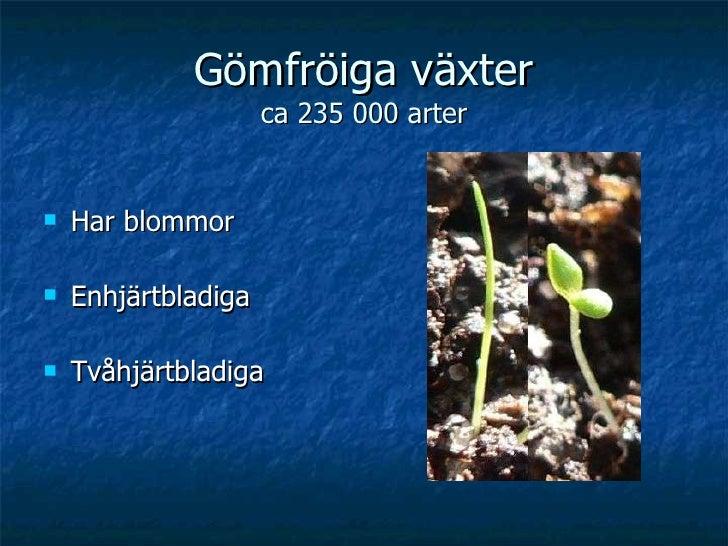 Gömfröiga växter ca 235 000 arter <ul><li>Har blommor </li></ul><ul><li>Enhjärtbladiga </li></ul><ul><li>Tvåhjärtbladiga <...