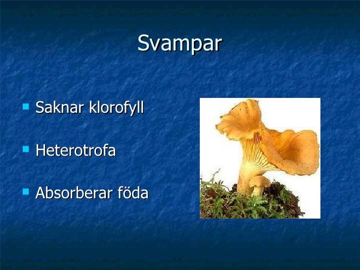 Svampar <ul><li>Saknar klorofyll </li></ul><ul><li>Heterotrofa </li></ul><ul><li>Absorberar föda </li></ul>