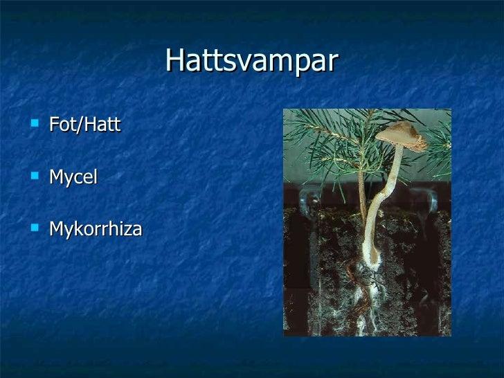 Hattsvampar <ul><li>Fot/Hatt </li></ul><ul><li>Mycel </li></ul><ul><li>Mykorrhiza </li></ul>