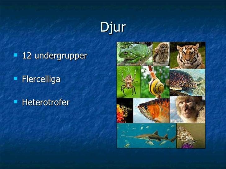 Djur <ul><li>12 undergrupper </li></ul><ul><li>Flercelliga </li></ul><ul><li>Heterotrofer </li></ul>