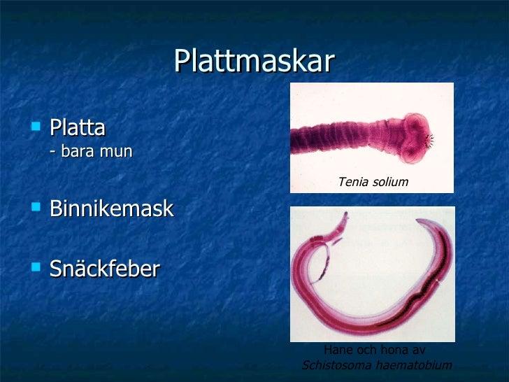 Plattmaskar <ul><li>Platta  - bara mun </li></ul><ul><li>Binnikemask </li></ul><ul><li>Snäckfeber </li></ul>Tenia solium H...