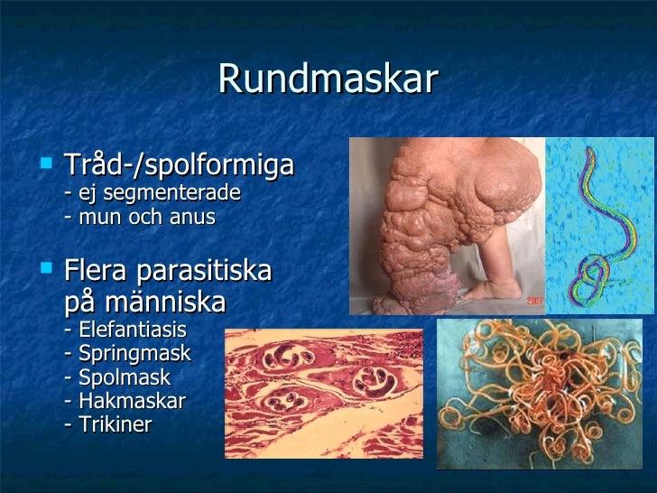 Rundmaskar <ul><li>Tråd-/spolformiga - ej segmenterade - mun och anus </li></ul><ul><li>Flera parasitiska på människa - El...