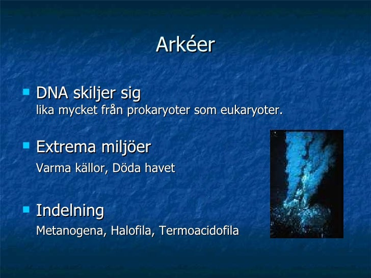 Arkéer <ul><li>DNA skiljer sig  lika mycket från prokaryoter som eukaryoter. </li></ul><ul><li>Extrema miljöer Varma källo...