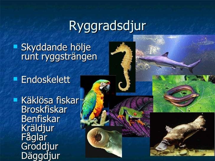 Ryggradsdjur <ul><li>Skyddande hölje runt ryggsträngen </li></ul><ul><li>Endoskelett </li></ul><ul><li>Käklösa fiskar Bros...