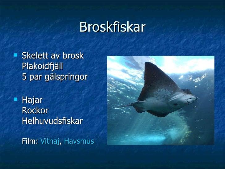 Broskfiskar <ul><li>Skelett av brosk Plakoidfjäll 5 par gälspringor </li></ul><ul><li>Hajar Rockor Helhuvudsfiskar Film:  ...