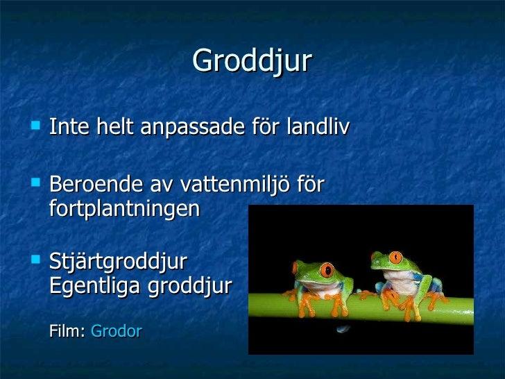 Groddjur <ul><li>Inte helt anpassade för landliv </li></ul><ul><li>Beroende av vattenmiljö för fortplantningen </li></ul><...