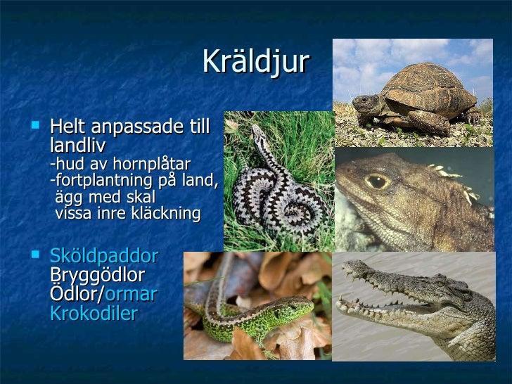 Kräldjur <ul><li>Helt anpassade till landliv -hud av hornplåtar -fortplantning på land,  ägg med skal  vissa inre kläcknin...